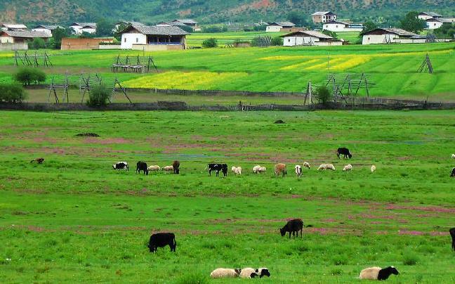 香格里拉市力推生物产业重点项目建设