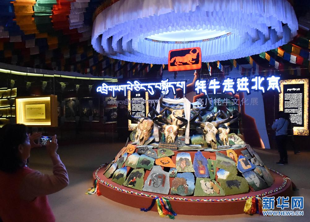 《牦牛走进北京——高原牦牛文化展》在首博展出