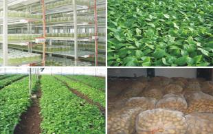 科技创新助推云南省马铃薯种业跨越式发展