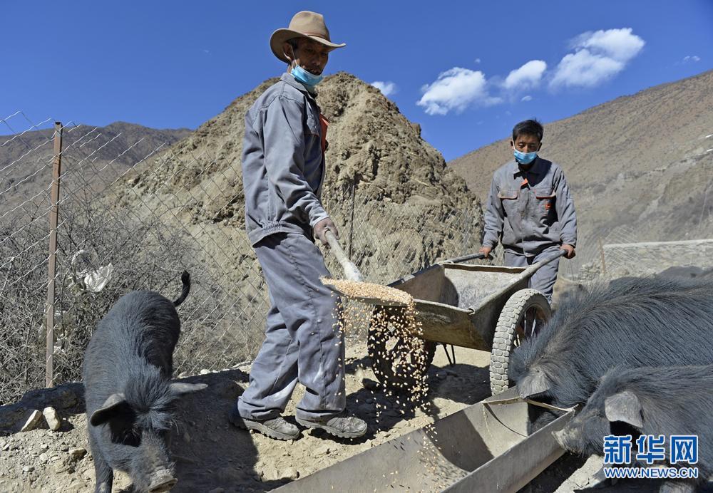 西藏山南:特色产业带动边境村致富