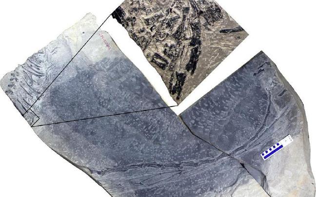 """专家:2.45亿年前的""""海洋霸主""""恐头龙应是胎生"""