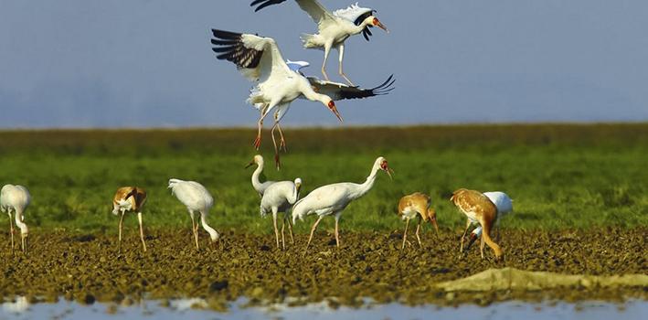 首批夏候鸟飞抵鄱阳湖