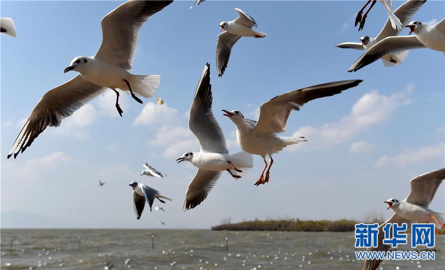 昆明滇池环湖湿地春意盎然引游人