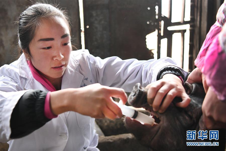 周停:秦岭深处的农户贴心女兽医