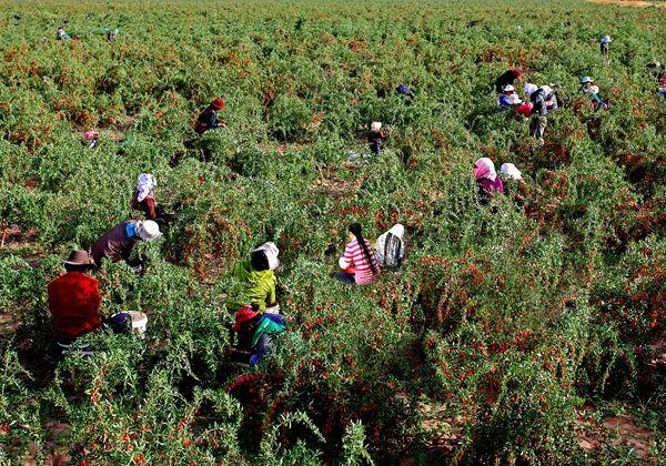 海西州部署落实脱贫巩固提升工作 全面打造四省藏区脱贫攻坚示范州