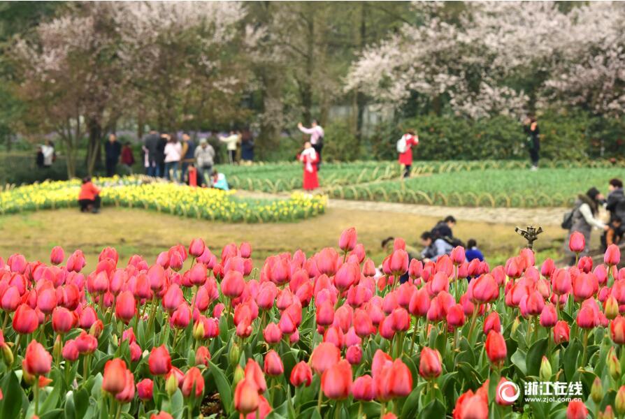 杭州:太子湾最美的花季来了,约吗?