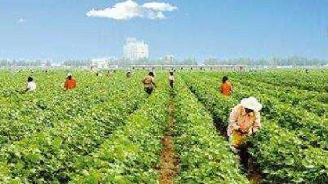 铁岭:周志宇办家庭农场带领残疾人抱团致富