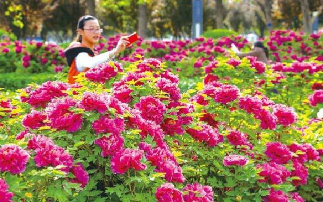 洛阳旅游:以花为媒 欢歌前行