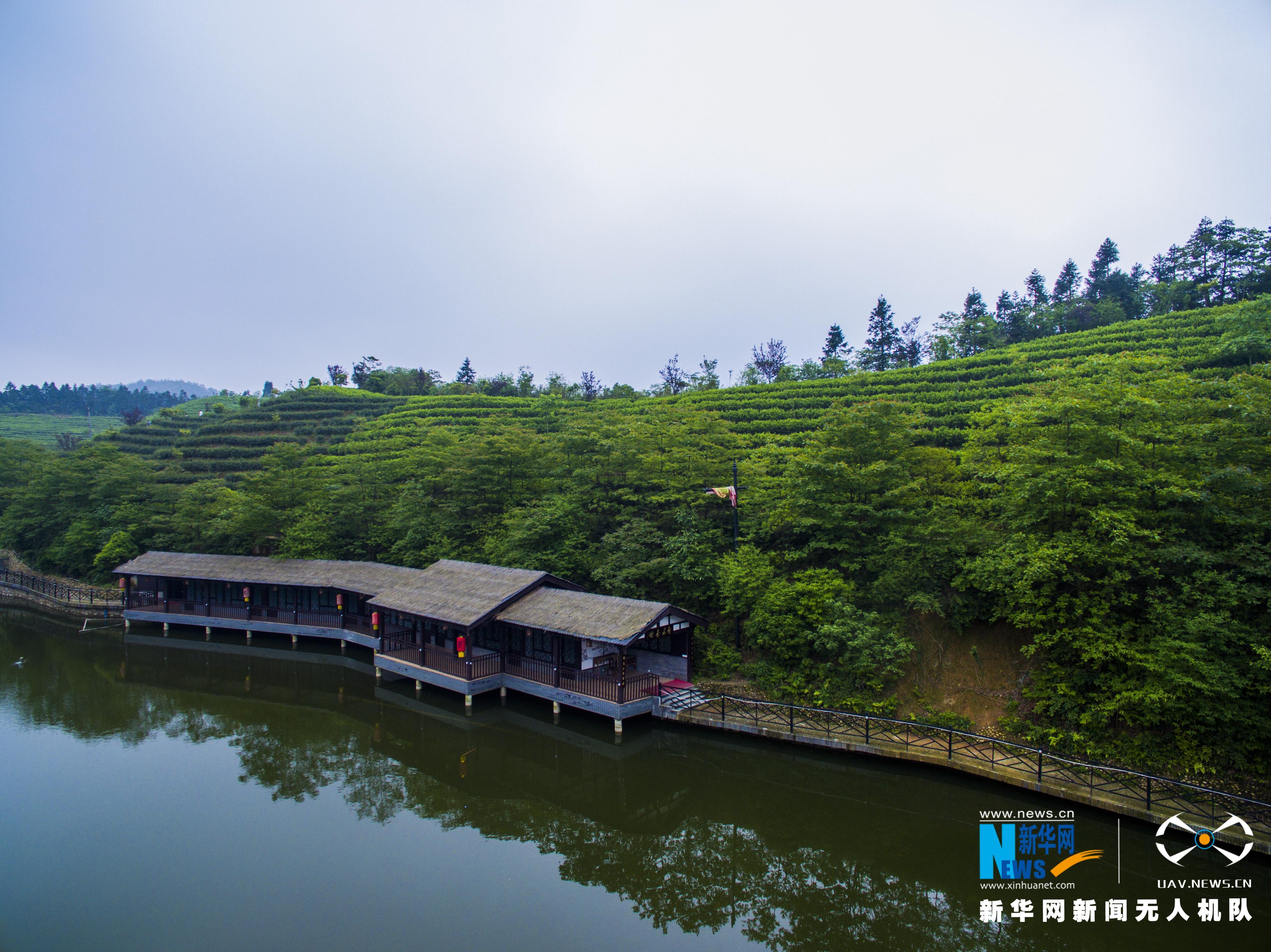 """航拍南昌千亩茶园 看""""旅游+茶""""模式如何发展"""