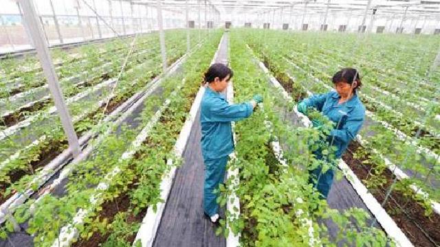 高校科研院所和农事企业在沈结盟