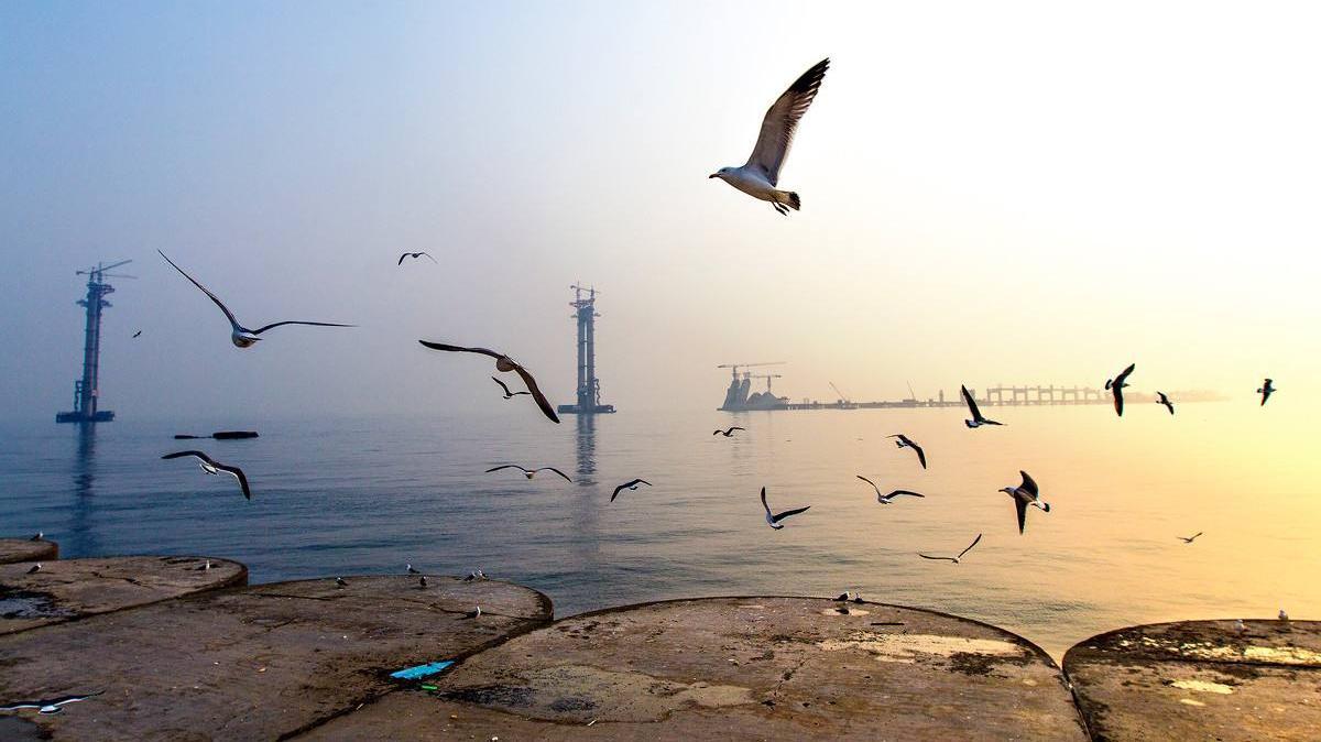 大连万只繁殖海鸟得到全面保护