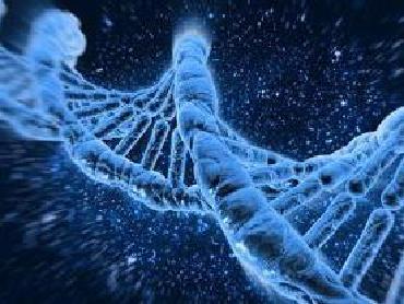 """""""相貌基因"""" 让DNA复原相貌成可能"""
