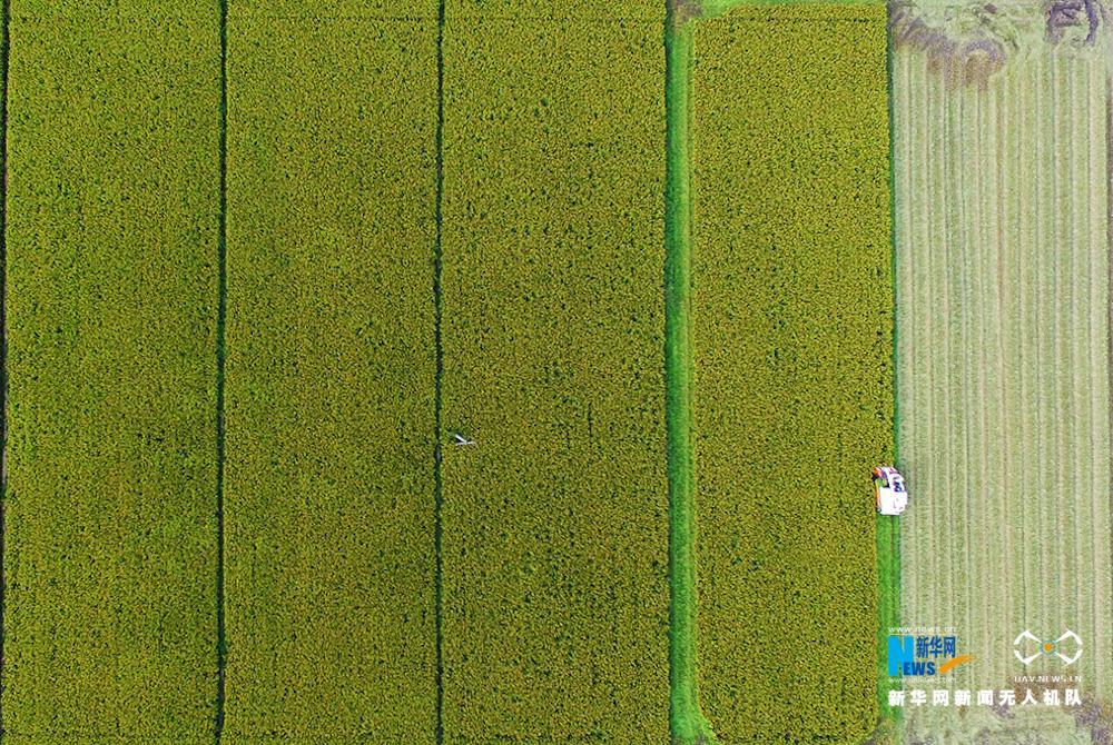 谷稻分离电路图
