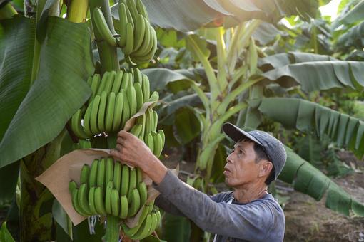 广西龙州:现代特色农业示范区