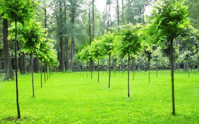 """中国缅甸启动""""友谊林""""生态项目"""
