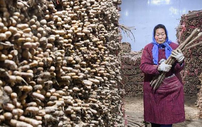 河南兰考:专业合作社助农增收