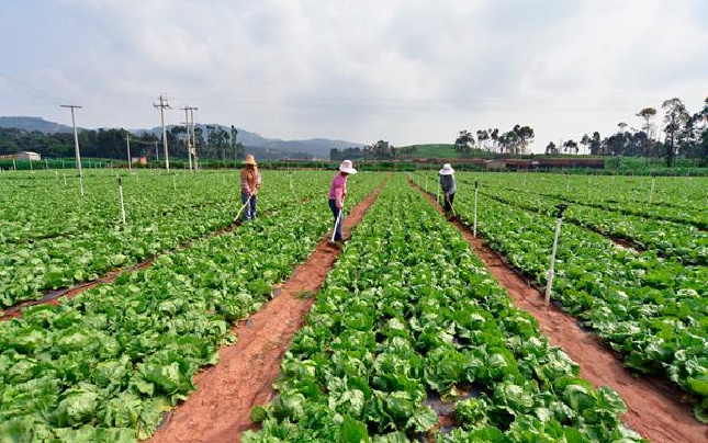 新华网评:推进供给侧结构性改革,农业这块短板要补起来