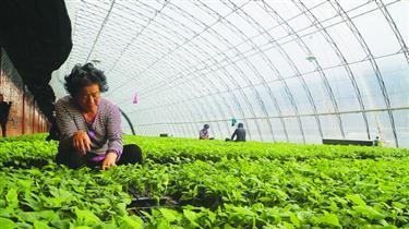 朝阳:4家龙头企业助推凌源现代农业发展