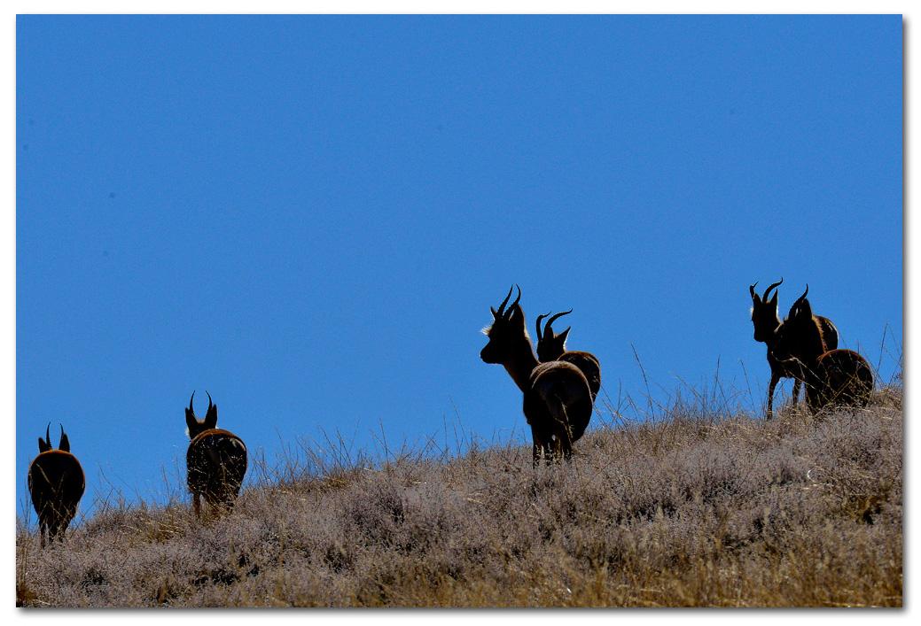 西藏摄影家【第24期】:格桑次仁