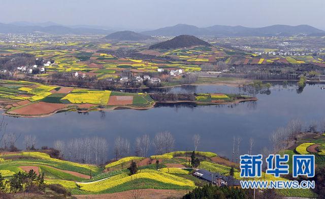 陕西汉中:满眼金黄溢春光