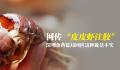 """网传""""皮皮虾注胶"""" 深圳食药监局:这种说法不实"""