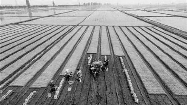 丹东4.7万公顷稻田开始插秧