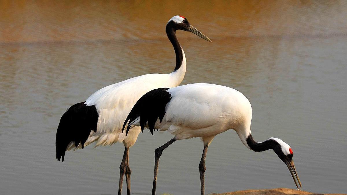 锦州严打非法猎捕野生鸟类行为