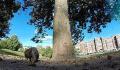 加拿大:调皮松鼠偷相机 不顾追赶跑上树