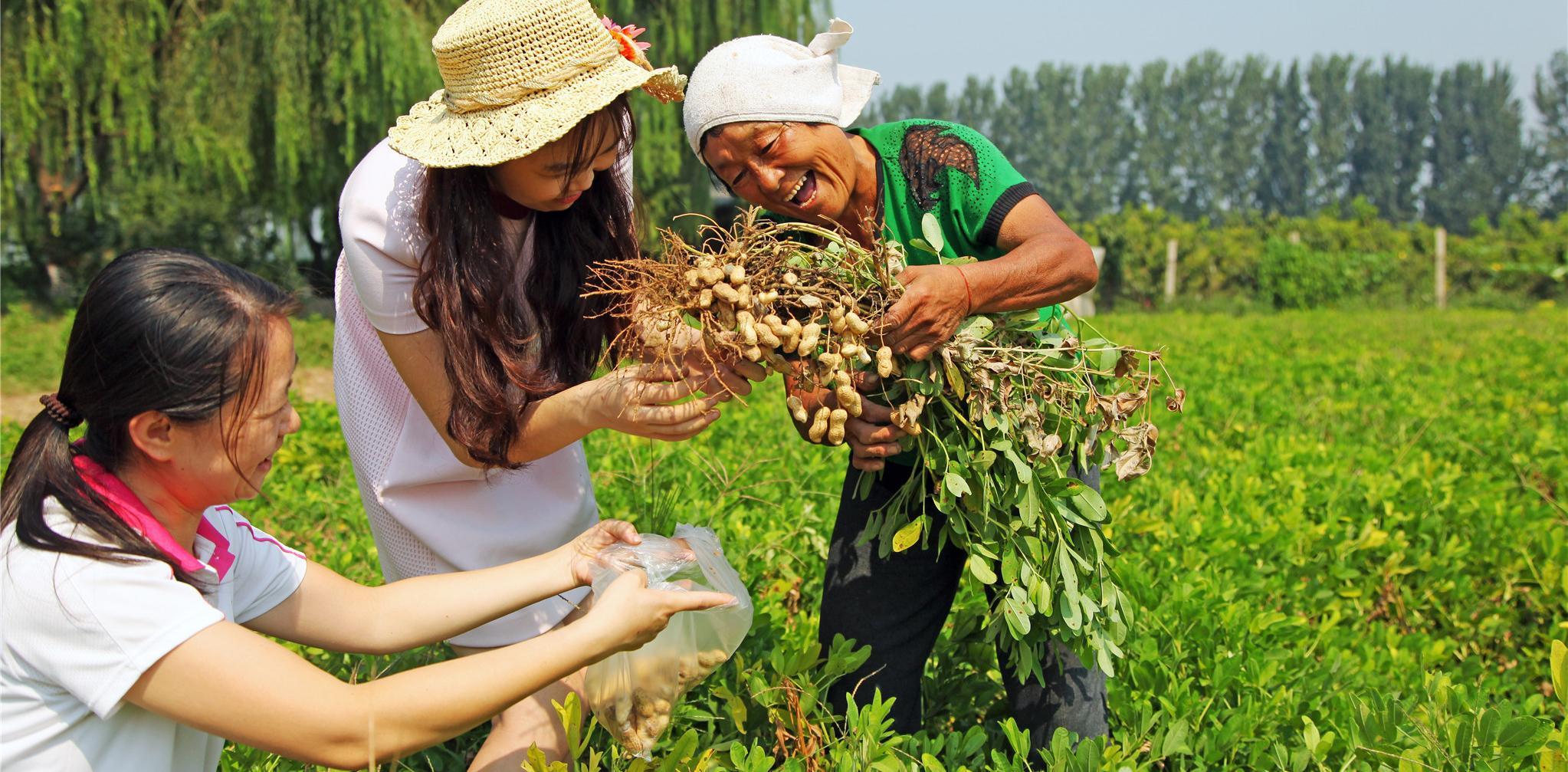 河北晋州周家庄传统果园变身现代观光园图片