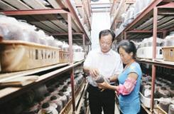 滁州:致富带头人种茶树菇带领乡邻致富