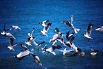 青海湖整体生态环境向好