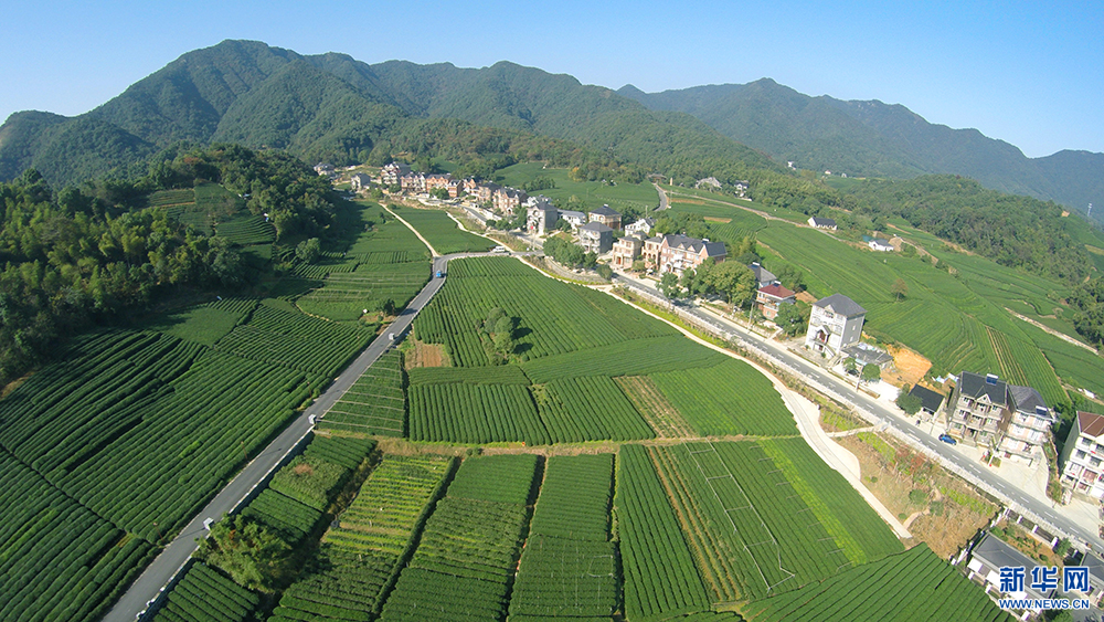 【网络媒体走转改】杭州之江龙坞茶镇:生态宜人 文化聚集