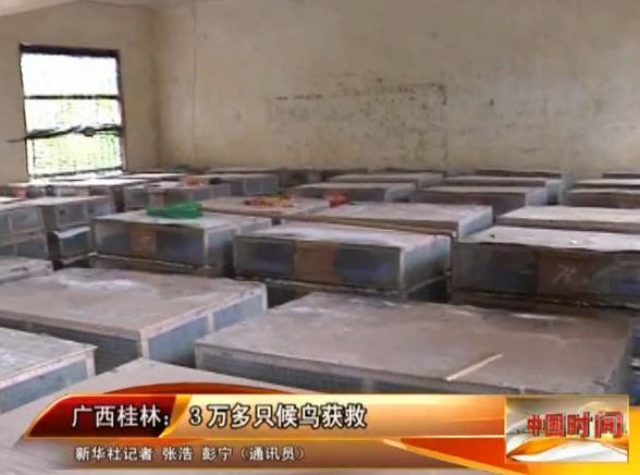 广西桂林:3万多只候鸟获救