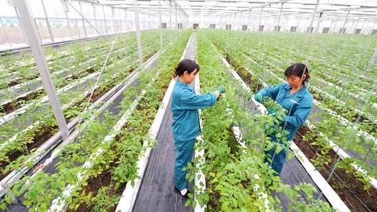 沈阳推进都市型农业发展  促进三次产业融合
