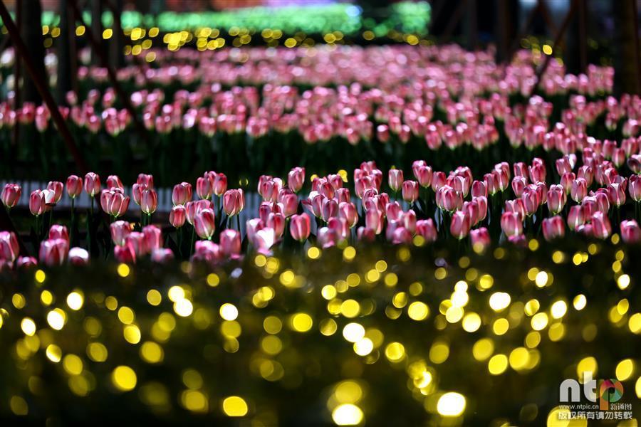 """在浙江省宁波市钱湖北路上,由9999朵led灯组成的郁金香""""花海""""造型美轮"""