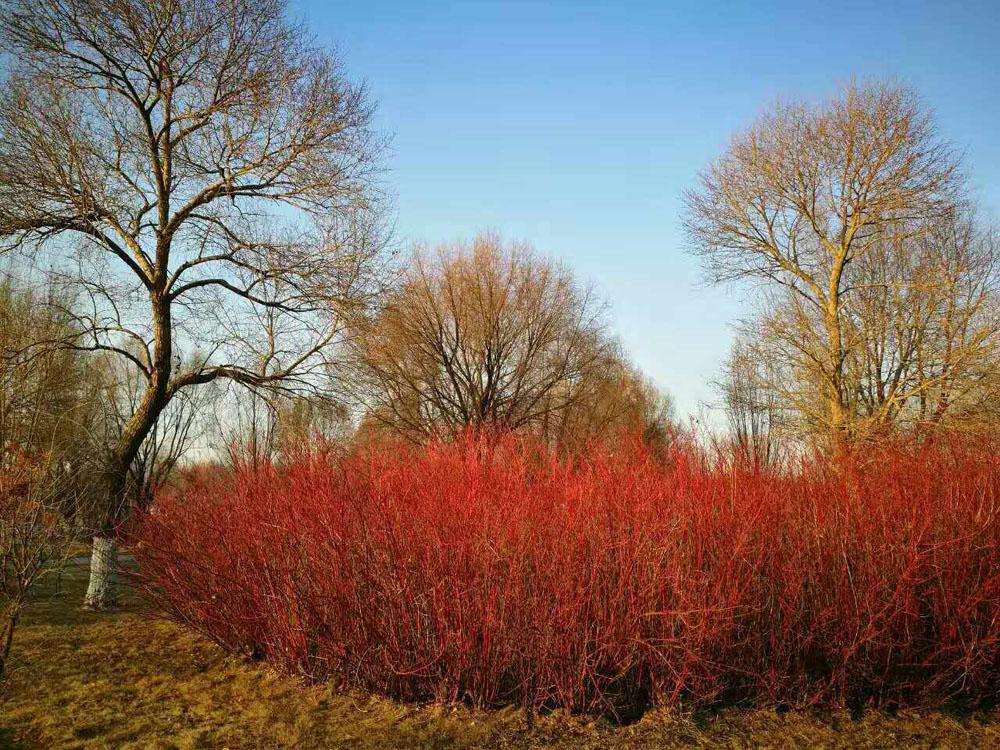 代州的秋与冬