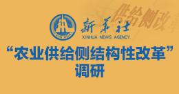 """""""农业供给侧结构性改革""""调研"""