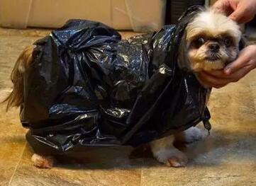 年都过完了,听说你家收集的塑料袋还没用完……