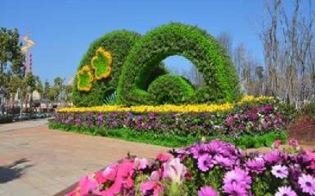 晋宁区28万余株花卉种植为城市增绿添美