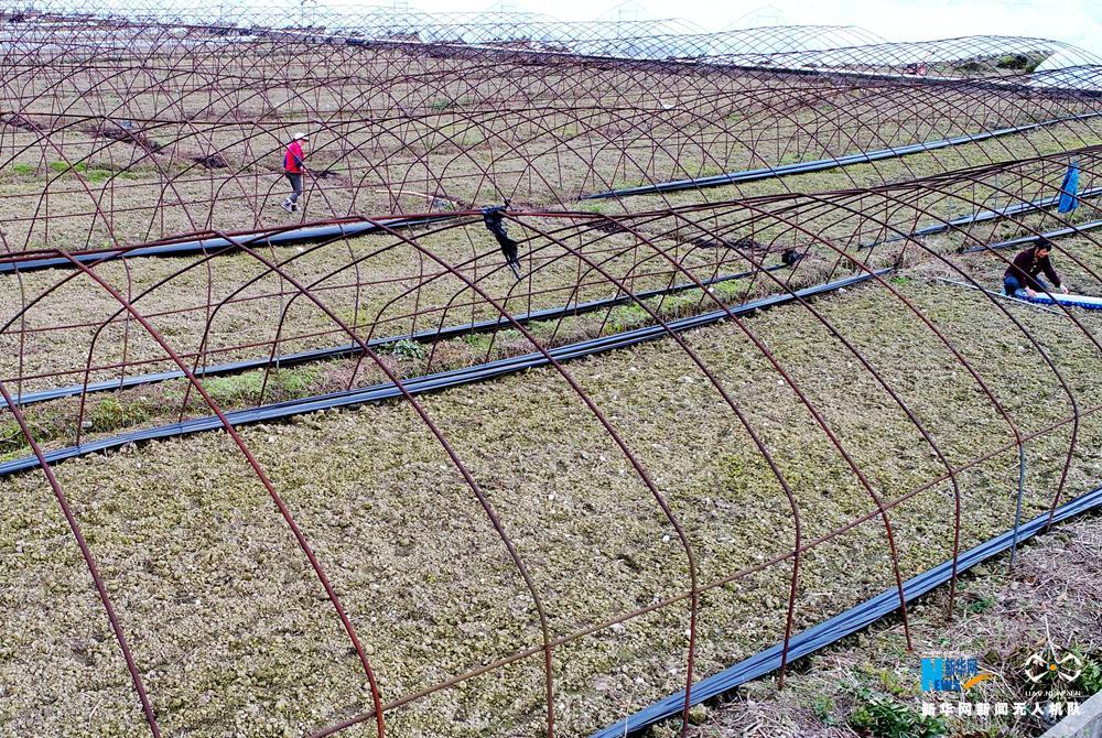 无人机看两会:革命老区重庆酉阳特色蔬菜园发展之路