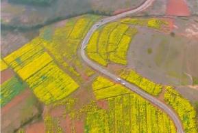 视频:油菜花 光伏基地 赛道 油茶林融为一体