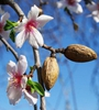 待到春花烂漫时,我在青海等你来赏花!