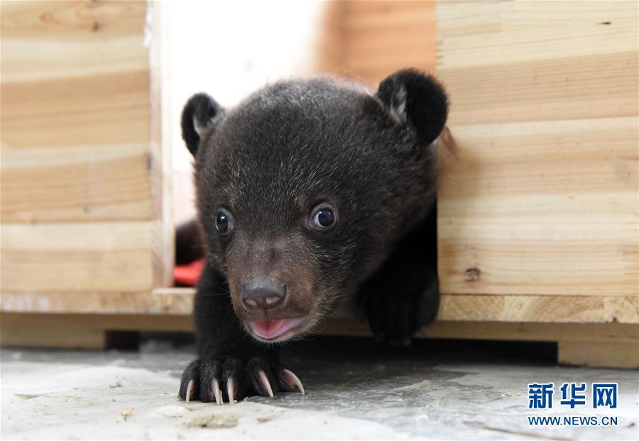 """""""龙凤胎""""小熊的卖萌生活"""