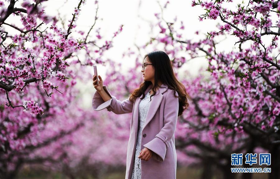 四月踏青赏桃花