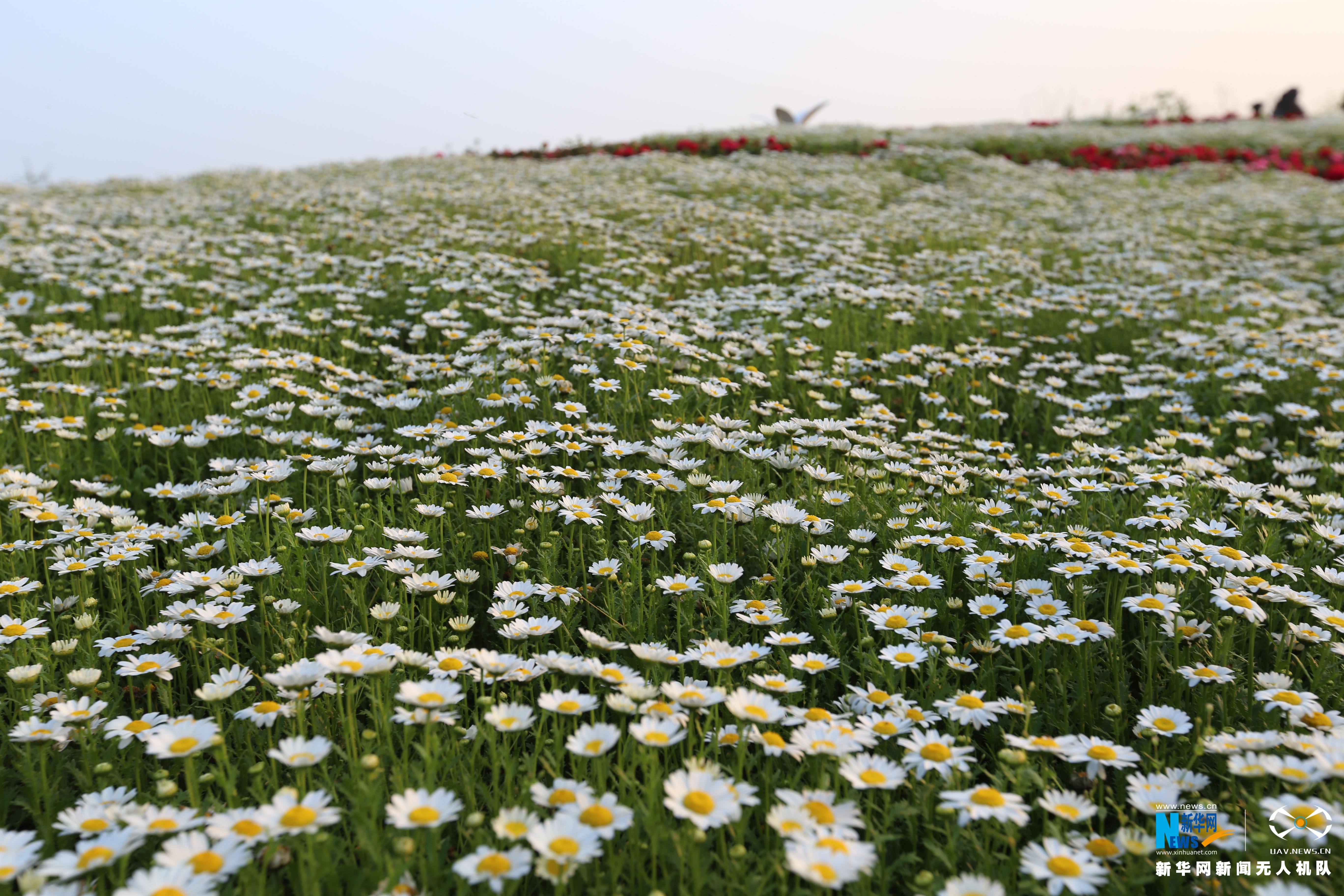 航拍江西省第四届花博会园区 如同多彩图案画
