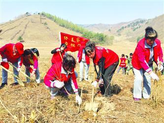 抚顺:3000市民参与义务植树