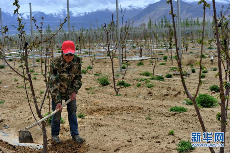 西藏:生态工程建设助力扶贫