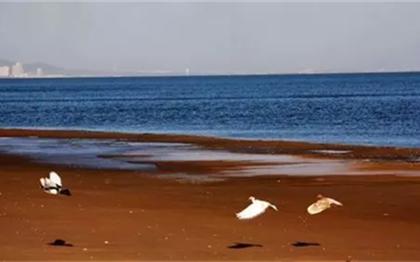 秦皇岛这两个景区,纳入国家重点保护对象!| 每天有料三分钟