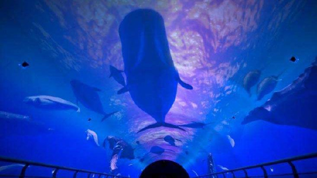 首届大连海洋文化节昨日开幕