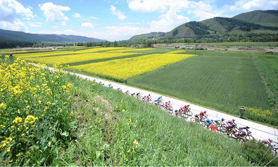 自行车——2016年环青海湖国际公路自行车赛进入第二赛段